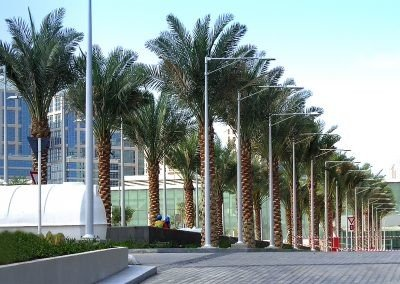 Cleveland Clinic row of palm trees