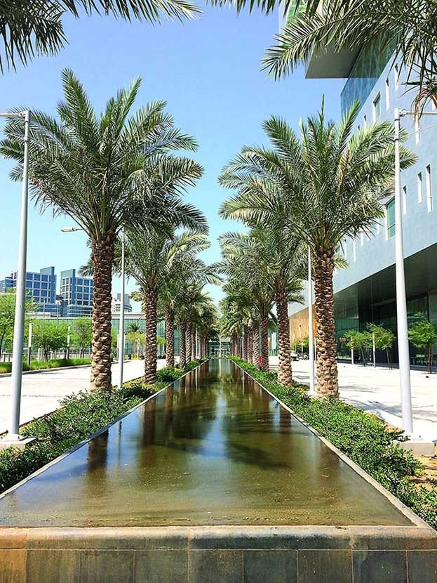 Cleveland Clinic row of palm trees outside hospital