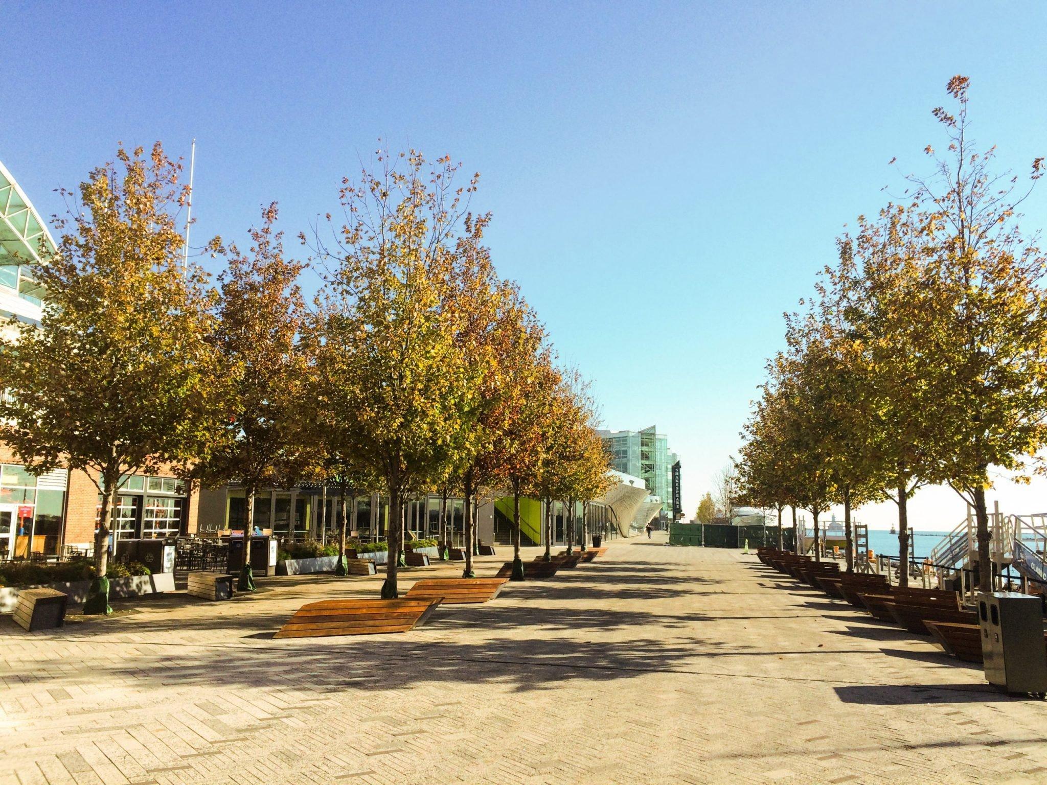 Navy Pier Trees