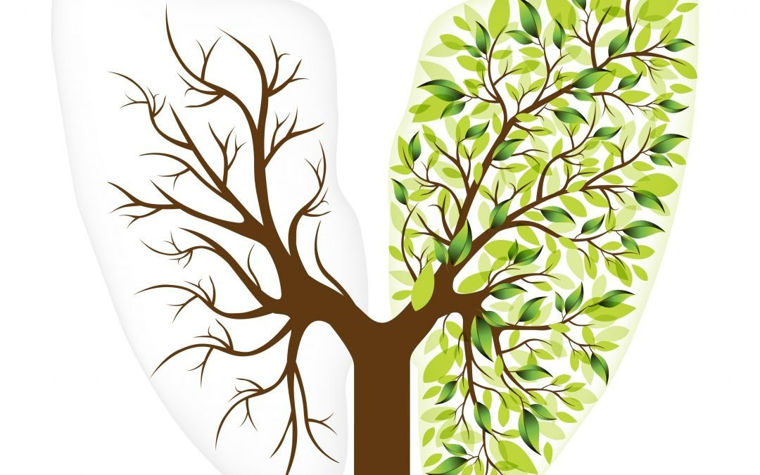 Support National Tree Week