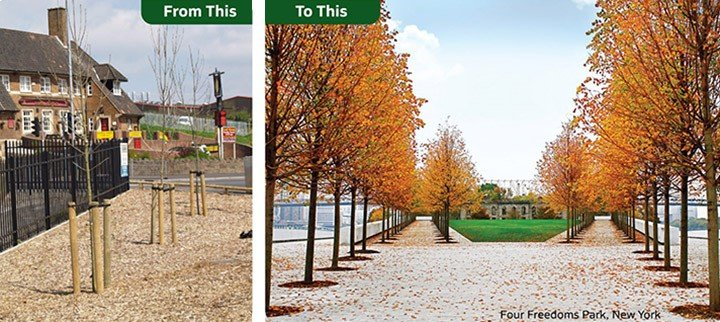Landscape and Tree anchoring in Four Freedoms Park New York