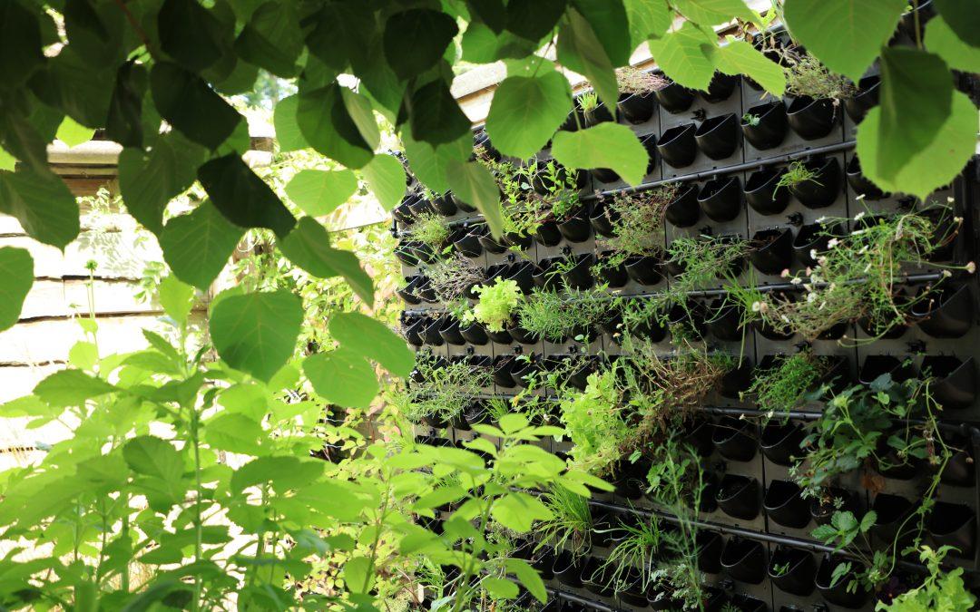 A great example of a G-WALL, Modular Living Wall System